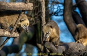 Zoo_Duisburg-028