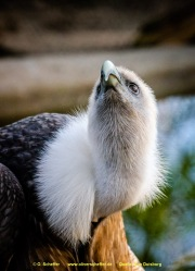 Zoo_Duisburg-042
