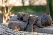 Zoo_Duisburg-048