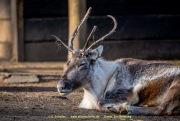 Zoo_Duisburg-054
