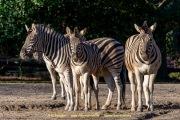 Zoo_Duisburg-055