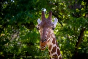 Zoo_Duisburg-123