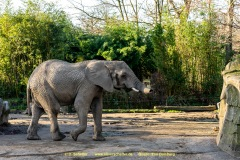 Zoo_Duisburg-005