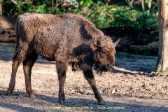 Zoo_Duisburg-011