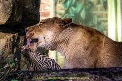 Zoo_Duisburg-019