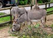 Zoo_Krefeld-12