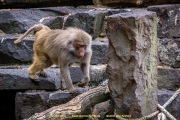 Zoo_Krefeld-13