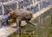 Zoo_Krefeld-15