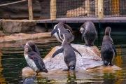 Zoo_Krefeld-19