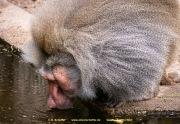 Zoo_Krefeld-30
