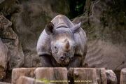 Zoo_Krefeld-31