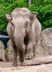 Zoo_Krefeld-33