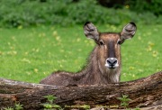 Zoo_Krefeld-37