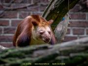 Zoo_Krefeld-43