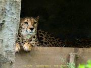 Zoo_Krefeld-45