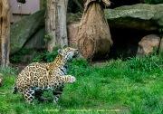 Zoo_Krefeld-47