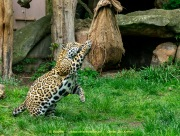 Zoo_Krefeld-48