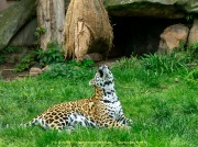 Zoo_Krefeld-50