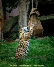 Zoo_Krefeld-51
