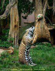 Zoo_Krefeld-53