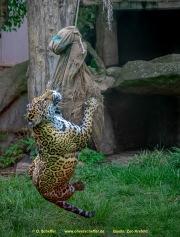 Zoo_Krefeld-58