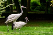 Zoo_Krefeld-62