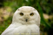 Zoo_Krefeld-71