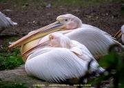 Zoo_Krefeld-80