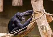 Zoo_Krefeld-81