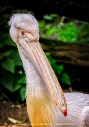 Zoo_Krefeld-83