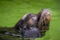 Zoo_Krefeld-17
