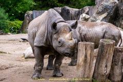 Zoo_Krefeld-23