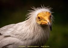 Zoo-bird-01