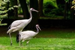 Zoo-bird-03