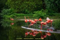 Zoo-bird-04