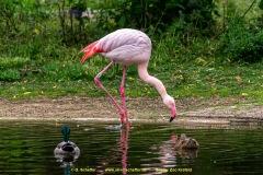 Zoo-bird-06