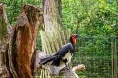 Zoo-bird-07