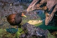 Zoo-bird-09