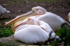 Zoo-bird-11