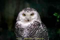 Zoo-bird-13