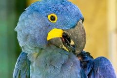 Zoo-bird-14