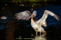 Zoo-bird-16