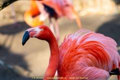 Zoo-bird-17