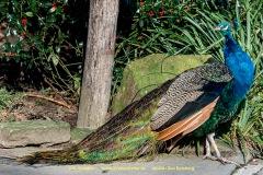 Zoo-bird-18