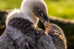Zoo-bird-19