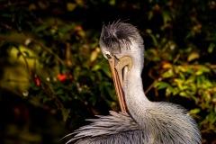 Zoo-bird-21