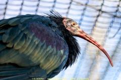 Zoo-bird-22