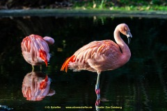 Zoo-bird-23