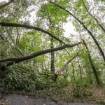 Aaper Wald nach Ela
