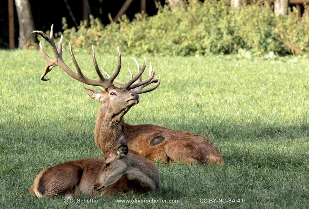 2014-10-18 Wildpark Grafenberg